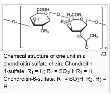 chondrotin molecule cho  fate